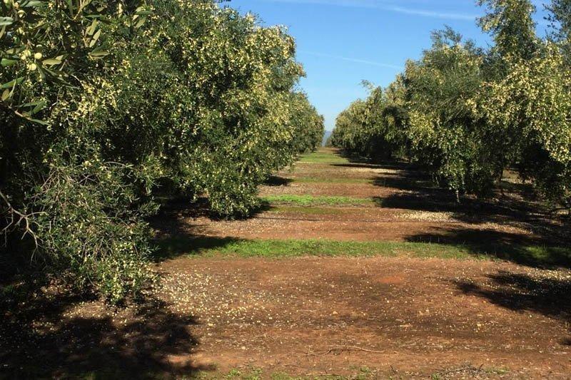 Gestión de Fincas Agrícolas | deCampo Ingenieros