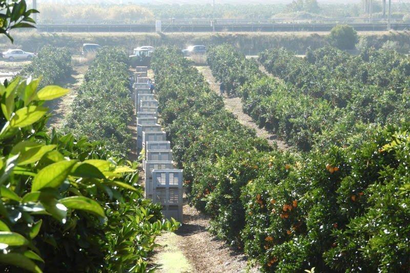 deCampo Ingenieros | Asesoramiento técnico en materia agrícola