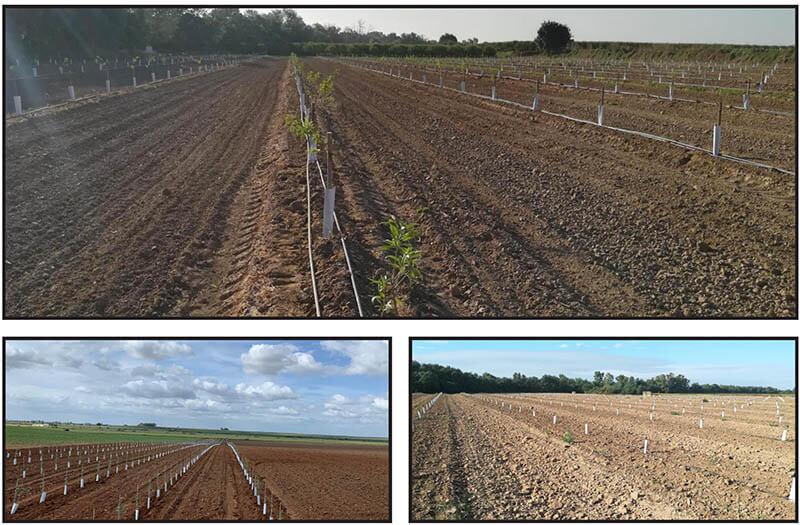 Nuevas plantaciones | deCampo Ingenieros
